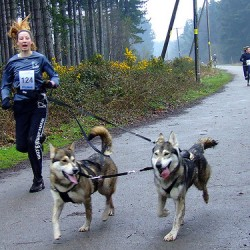 Training dogs to run on a leash